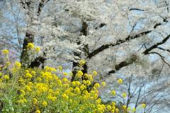 spring for tokyoites 2018
