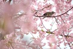 spring for tokyoites 2019