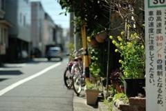 spring for tokyoites 2020