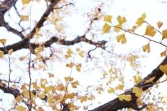 autumn for tokyoites 2015