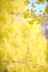 autumn for tokyoites