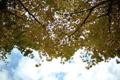 autumn swinging