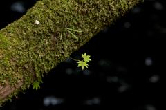 幹に咲く葉