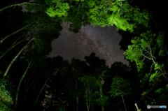 ブナ森から覗く天の川