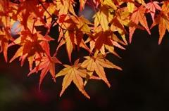 千秋公園・紅葉2014Ⅶ