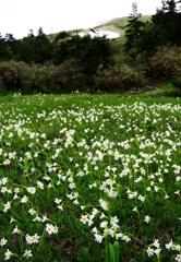 花の山へⅩⅢ