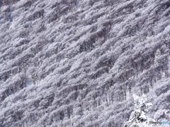 霧氷のブナ斜面