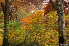 秋の森を歩くⅢ