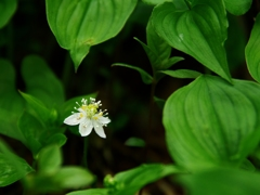 花の山へⅥ
