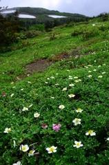 花の山へⅩⅥ