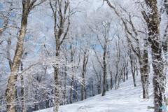 冬を惜しむ