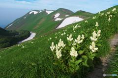 花と山とⅡ