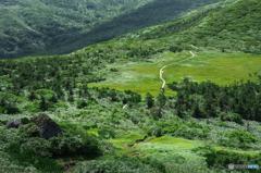 湿原を望む