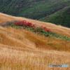 草紅葉の中の彩