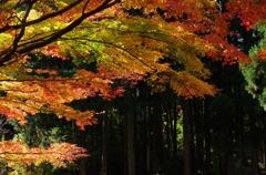 秋の陽射し受けて