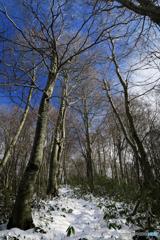 登山道は初冬