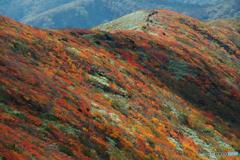 秋駒紅葉狩りⅤ