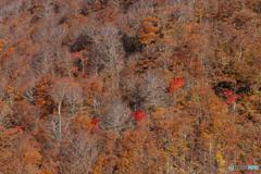 対峙斜面の秋模様。