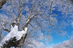 厳冬の名残