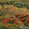 秋駒紅葉狩りⅣ