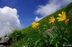 夏山と花Ⅸ
