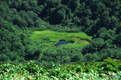 ハートの池塘