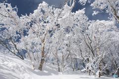 姫神山霧氷Ⅳ
