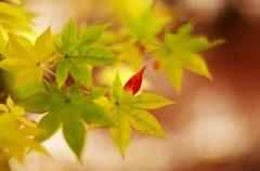 千秋公園・紅葉2014Ⅴ