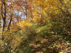 秋黄金の道