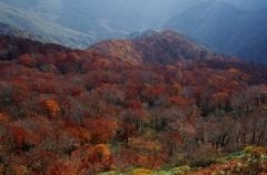 太平山2014Ⅷ