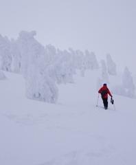 樹氷原を行く