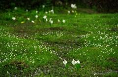 花の山へⅩⅣ