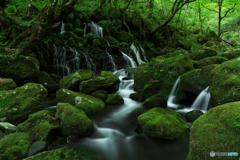 Moss  world...Ⅱ
