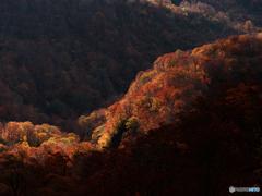 秋陽射す森