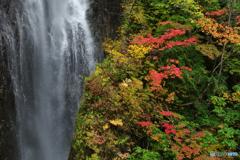 滝を背に染まる