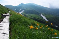 花と山とⅢ