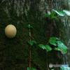 森のボタン