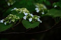 花の山へⅤ