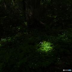ニリンソウの森Ⅱ