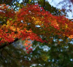 千秋公園 2013秋・Ⅳ