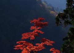 太平山2014ⅩⅦ