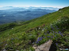 花と山並み