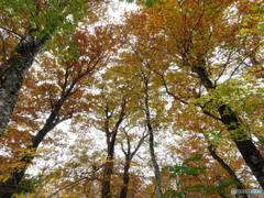 秋の森を歩くⅤ