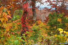 秋の森を歩くⅠ