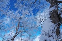 姫神山霧氷Ⅱ