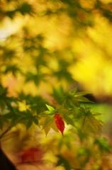 千秋公園・紅葉2014Ⅵ