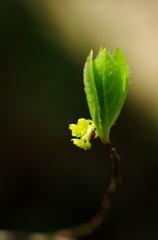 里山の春Ⅲ