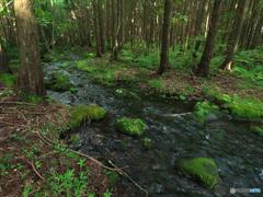 森を流れる