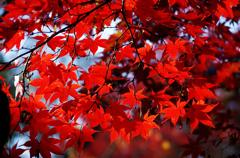 千秋公園 2013秋・Ⅲ