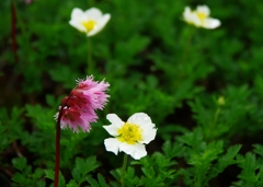 花の山へⅩⅤ
